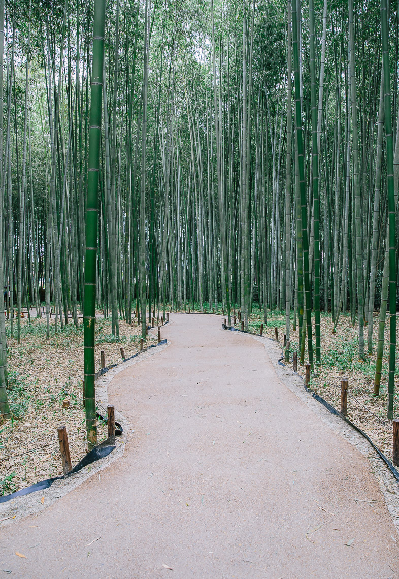 studiocd_05-2016_japan_bambooforest